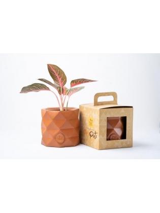 Indoor Terracotta pot medium - Triangle