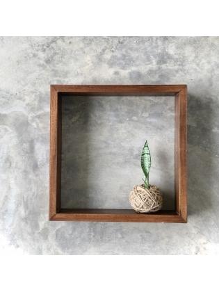 Kokedama Snake Plant (Small) - with  Timber frame