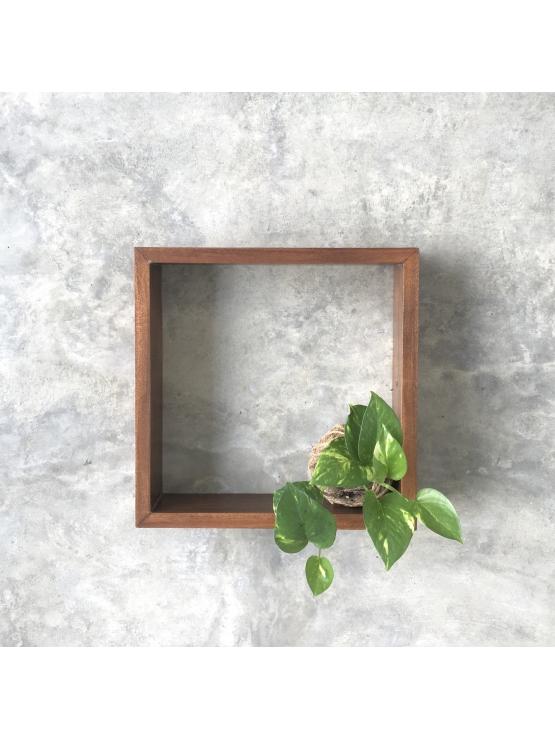 Kokedama Money Plant ( Small) - with  timber frame