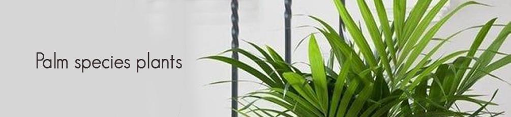 Palm Species Plants